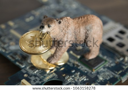 Bear With Gold Bitcoin Cryptocurrency In Mouth On Computer Motherboard. Bear Market Wall Street Financial Concept.