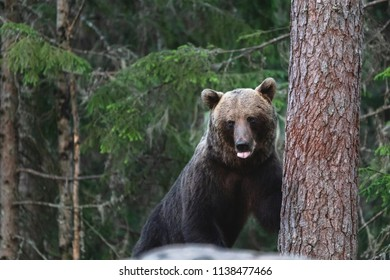 Bear hiding in forest