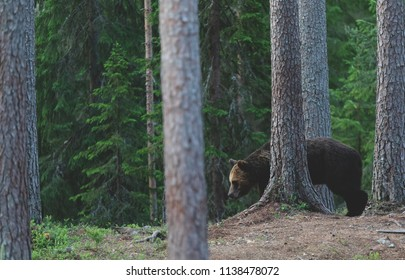 Bear hiding in nature