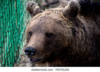 Bear inside small enclosure