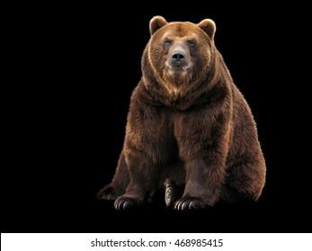 Bear on black