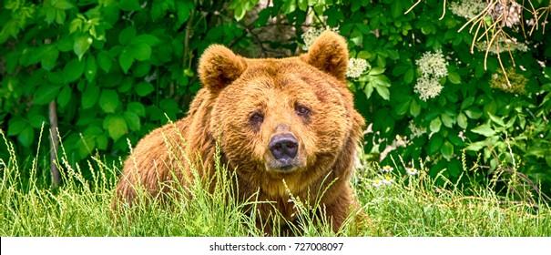 Bear on green grass