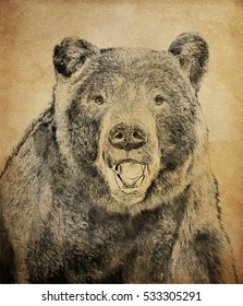 Bear on vintage background. Illustration in draw, sketch style.