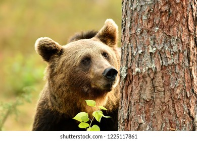 bear portrait with a tree trunk. save the forest.