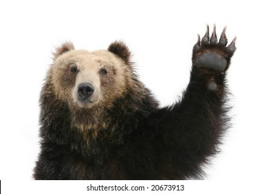 Bear Raising Paw into the air.