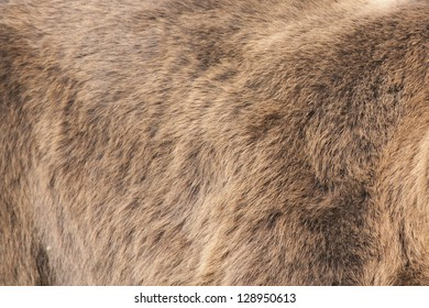 Bear Real Fur Background