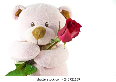 bear with red rose on white background