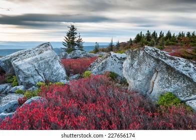 Bear Rocks Preserve Dolly Sods Wilderness Area West Virginia Autumn Landscape