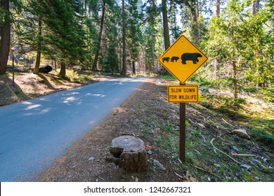 bear sign on the road in national park.