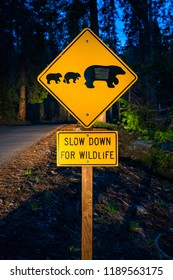 bear sign on the road at night.