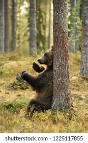 bear sitting against a tree in forest at summer