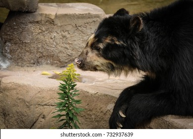 bear smell yellow flower at zoo in the morning