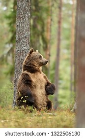 bear standing against a tree in forest