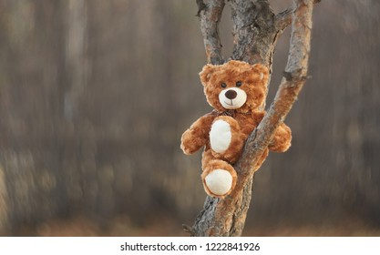 Bear Teddy comfortably settled on a branch of a beloved tree and with a smile looks at the world around us.  Funny bear. Smooth bokeh. Winnie the Pooh.