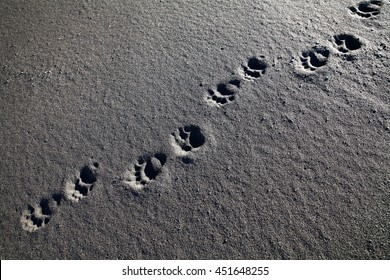 Bear trace on a beach