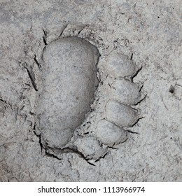 Bear track in soft mud at the edge of a river in Canada