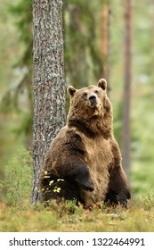 Bear with a tree in forest