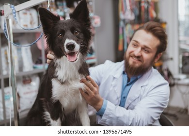 Bearded cheerful male vet smiling, petting a dog at hic clinic. Adorable black dog looking to the camera happily, sitting on examination table at veterinary clinic, copy space