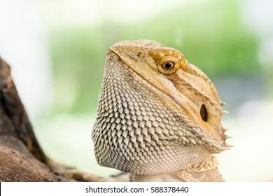 Dragon Portrait Images, Stock Photos & Vectors | Shutterstock