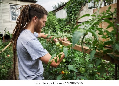 Bearded farmer with dreadlocks is working at backyard garden of his house. Natural farming and healthy eating concept