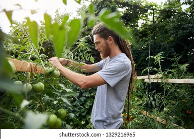Bearded farmer with dreadlocks working in his greenhouse