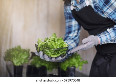 bearded man in apron and gloves holds a bowl of fresh green salad