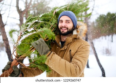 Bearded man carrying freshly cut down christmas tree in forest. Young lumberjack bears fir tree on his shoulder in the woods. Irresponsible behavior towards nature, save forest, keep green concept.