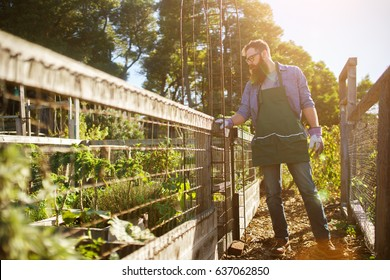 bearded man looking over communal garden shot with lens flare