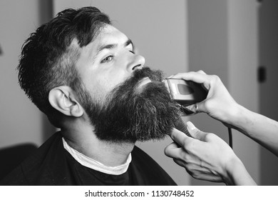 Bearded man, bearded male. Vintage barbershop, shaving. Portrait of stylish man beard. Barber scissors and straight razor, barber shop. Beard styling. Advertising barber shop concept. Black and white