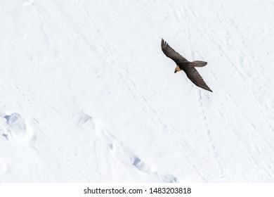 Bird Searching Images, Stock Photos & Vectors | Shutterstock
