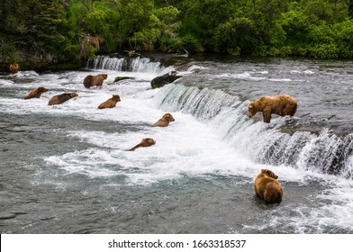 Bears fishing salmon at brooks fall in Katmai National Park and Preserve, Alaska