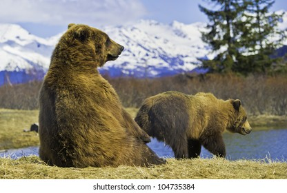 Bears on the river