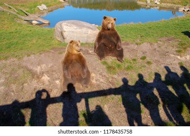 Bears versus men. Who is watching who?