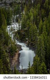 Beartooth River and Falls Through Lush Pine Trees