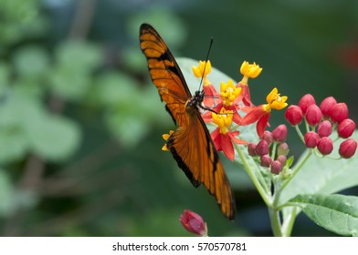 Beatiful butterfly in a tropical fresh garden