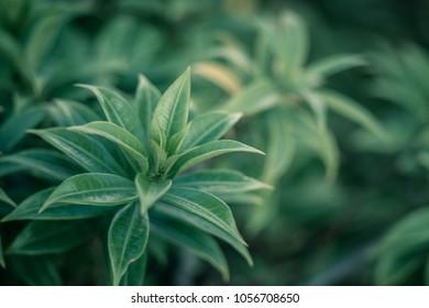 beatiful green leaves