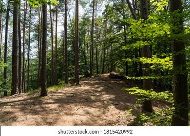 beatiful landscape of the pfälzer wald wood hills, rheinland-pfalz, germany - Shutterstock ID 1815420992