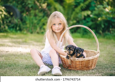 Beatiful little girl with long hair with puppies in a basket on green grass. Horizontal portrait
