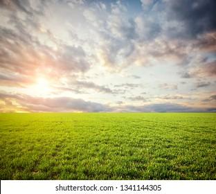 Beatiful morning field with bright sun