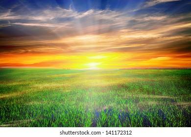 Beatiful morning green field with blue heaven