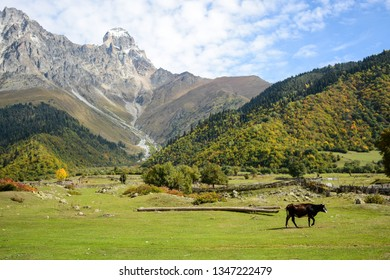 Beatiful nature landscape on the hiking route to Mazeri waterfall, Svaneti, Georgia