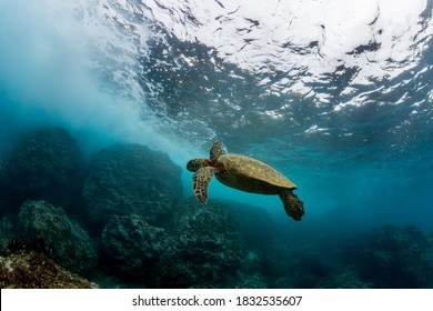 beatiful under water scene of a turtle on a reef