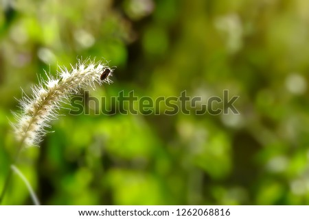 Beatle on grass flower