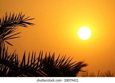 Beauftiful sunset through palm