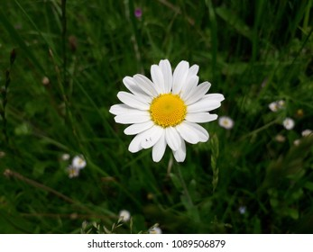Beauregard-Baret, France-05/12/2018: A white flower.