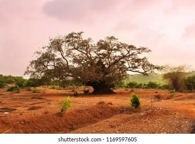 Beaurtiful pink sunset. Colorful nature landscape. Gokarna, Karnataka, India