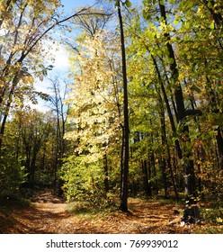 beauteful autumn lanscape