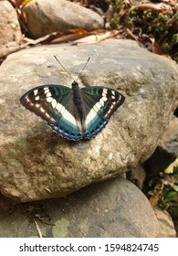 beautidful blue butterfly captured by mobile phone