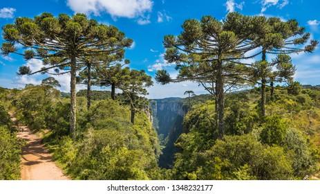 Beautifful view of some araucaria trees at Itaimbezinho Canyon - Cambara do Sul, Rio grande do Sul, Brazil