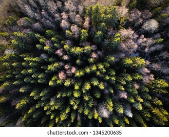 Beautifil autumnal forest from above in Finland, Europe